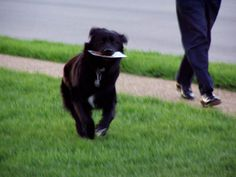 How many of the following tricks can your dog do? Does your dog perform any cool tricks that aren't on this list? I honestly can't imagine many more dog tricks that could possibly have been left of this list!...