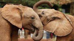 Besluit tot actie tegen handel in bedreigde diersoorten - Dieren - De Morgen