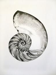 drawings of shells - Google Search