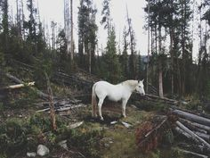Photographer Kevin Russ has been traveling the American West taking stunning photographs with his iPhone 4S and iPhone 5. He has been financing his travels by selling prints and licensing his photos for stock photography. #horse