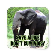 Save a Life Don't Buy Ivory Square Sticker - declare it tap to get yours!