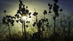 Desert Light - photograph by Kate Bazin fineartamerica.com #silhouette #desertphotography #yucca
