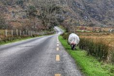 Driving in Ireland for the unprepared can be intimidating. Here are some tips and tricks for driving on the opposite side of the road. Philippines Cities, Visit Philippines, Ireland Beach, Ireland Vacation, Ireland Travel, Ireland People, Driving In Ireland, Backpacking Ireland, Nature