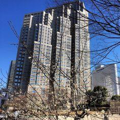 新宿中央公園の梅そのやっと風が収まったと思ったらまた西から嵐が来るとの予報