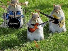 squirrel band