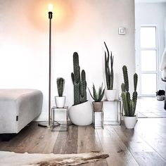 Created a cactus corner in our living room #cactus #homedetails #homestyling #dotd #livingroom