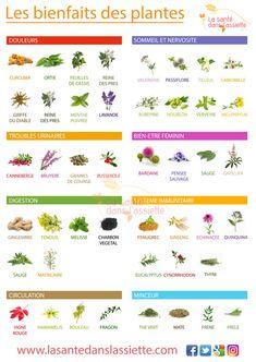 Les bienfaits des plantes Good To Know, Feel Good, Sante Plus, Food Texture, Qigong, Vegetable Garden Design, Nutrition, Herbal Tea, Doterra