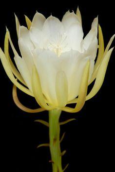 Midnight Garden: #Night #Blooming #Flowers.