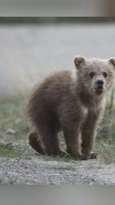 Cute Wild Animals, Cute Funny Animals, Animals Beautiful, Animals And Pets, Funny Animal Videos, Funny Animal Pictures, Cool Pets, Cute Dogs, Photo Animaliere