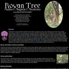 Today marks the start of the Celtic month of the Rowan Tree, the tree most associated with protection, intuition and psychic powers. Description from pearltrees.com. I searched for this on bing.com/images