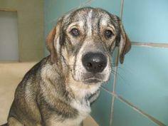 Dexter, Brown Animal Rescue, Sardinia, Ohio; dedicated rescue group ...