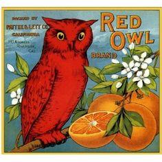 red owl on a vintage orange crate label Vintage Labels, Vintage Postcards, Vintage Ads, Funny Vintage, Vintage Signs, Vintage Images, Orange Crate Labels, Vegetable Crates, Red Owl