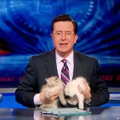 Colbert and kittens.   [it's a gif, so click or you'll miss out]