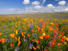 love the colors of these flowers in the field