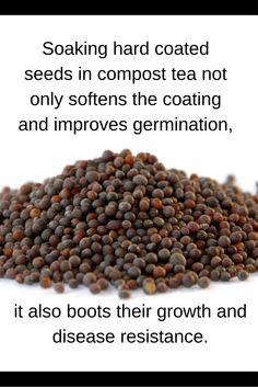 Seed Starting Tip