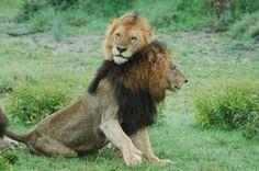 Pretty boy and Makhulu