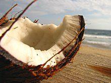 Kososový orech Seeds, Coconut, Fruit, Food, Essen, Meals, Yemek, Eten