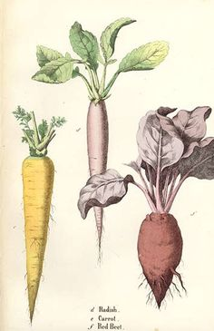 Lessons from the Vegetable World by Charlotte Mary Yonge