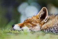 creatures-alive:  You may say Im a dreamer by Pim Leijen