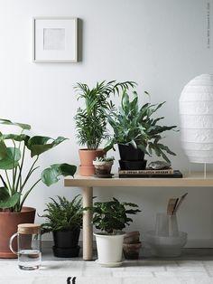 BLADVERK – vårens första växter | IKEA Livet Hemma – inspirerande inredning för hemmet