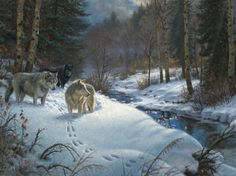 Wolves, winter night hunting