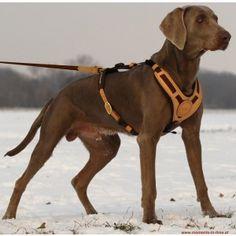 Harnais ergonomique pour chien