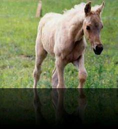 Baby picture of my amazing horse Honeyboy!