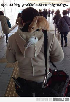 rabbit, picture day, anim, disney princesses, funny pictures, pet, tokyo today, bunni, hood