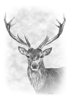 Stag Pencil Drawing by PencilsPensPixels