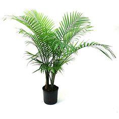 Delray Plants Majesty Palm in Pot Delray Plants https://www.amazon.com/dp/B00NOL8POA/ref=cm_sw_r_pi_dp_x_ZC7hyb2M221X5