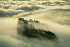 Redwoods in Coastal Fog