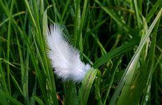 Witte veertjes vinden, wat betekent het? - Het engelen dagboek