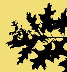 pinoak leaf silhouette - Google Search