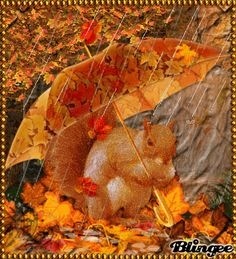 Squirrel Walking In The Rain Photo Editor Free, Walking In The Rain, Glitter Graphics, Autumn Inspiration, Rainy Days, Squirrel, Animation, Awesome, Nature