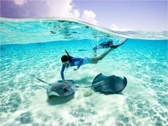 30 Must-See Family Destinations | Stingray City Grand Cayman Islands