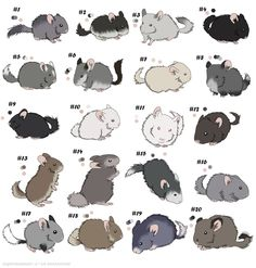 Chinchilla adoptables - ON HOLD by ForeignFrontierRanch on DeviantArt Chinchilla Facts, Chinchilla Care, Animals And Pets, Baby Animals, Funny Animals, Cute Animals, Chinchillas, Cute Animal Drawings, Cute Drawings