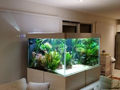 850 litre planted tank - All For Garden Glass Aquarium, Nature Aquarium, Home Aquarium, Aquarium Filter, Aquarium Design, Reef Aquarium, Aquarium Fish Tank, Planted Aquarium, Aquarium Landscape