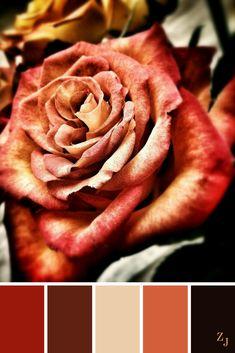 ZJ Colour Palette 446 #colourpalette #colourinspiration