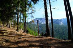 Túra a Hagymás-hegységben - Székelyföld - Erdély Erdős rész az Egyeskő (1608 méter) felé fotó Csedő Attila Basin, Places Ive Been, Country Roads, Neon, Mountains, Nature, Travel, Beautiful, Naturaleza