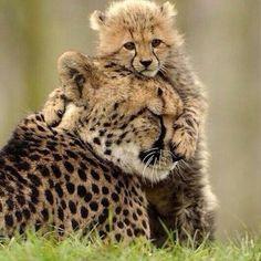 Una mamma e il suo piccolo