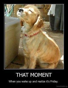 Friday Jokes, Friday Dog, Happy Friday Quotes, Friday Sayings, Tuesday Humor, Funny Friday, Monday Friday, Jokes Quotes, Dog Quotes