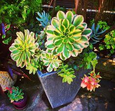 Gorgeous succulent pot