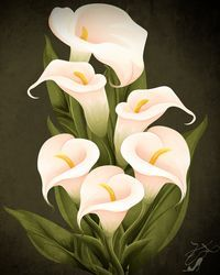 Calla Lily by setSET08 on deviantART