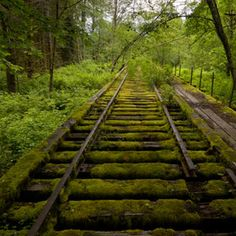 Nature reclaims an old and abandoned rail in Washington state.