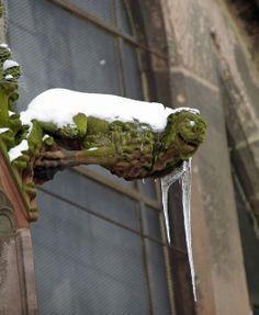 Wasserspeier am Freiburger Münster - Löwe