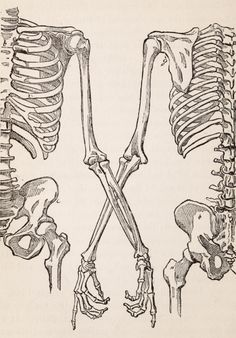 I like how these skeletons are almost holding hands, it's sweet. From Learning to draw - 1888 - via Internet Archive