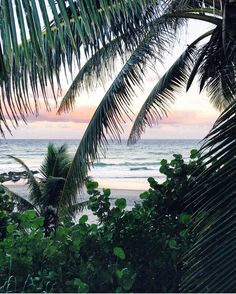 Tropical Island Adventures :: Escape to a Beach Paradise :: Soak in the Sun :: Palms + Ocean Air :: Free your Wild :: See more Untamed Island Inspiration @loverofficial
