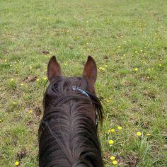 Jack riding