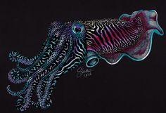 Cuttlefish By Si Mone