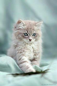 AN ADORABLE KITTEN!